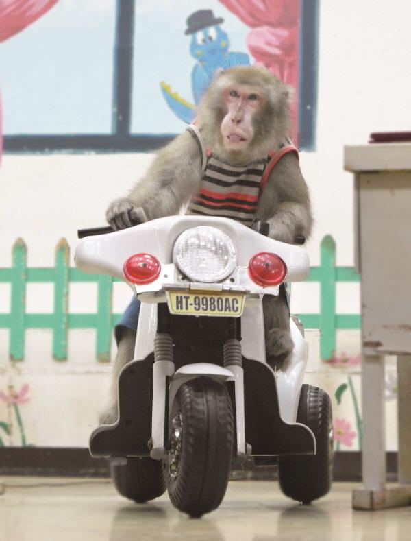 [크기]원숭이 학교2.jpg