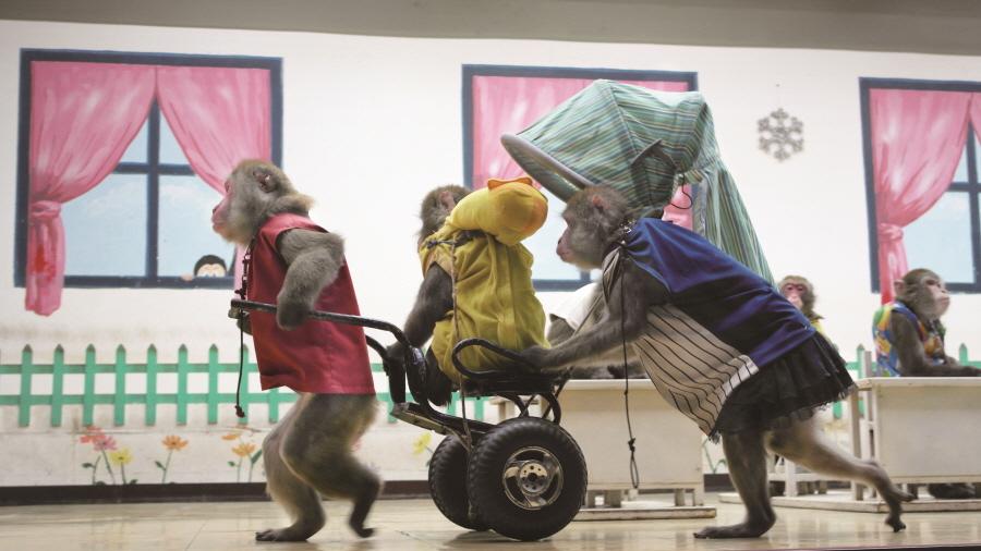 [크기]원숭이 학교.jpg