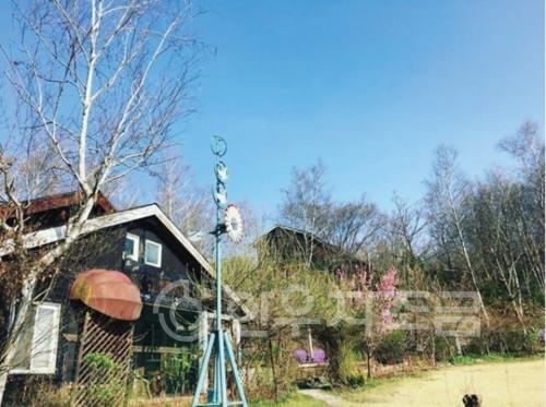 히미술관 자작나무숲.jpg