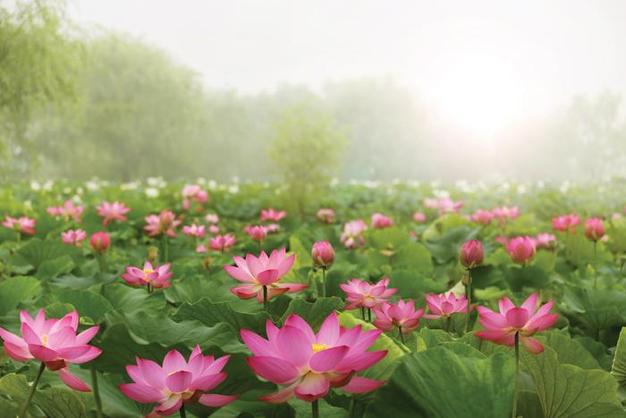 부여서동연꽃축제_1.jpg
