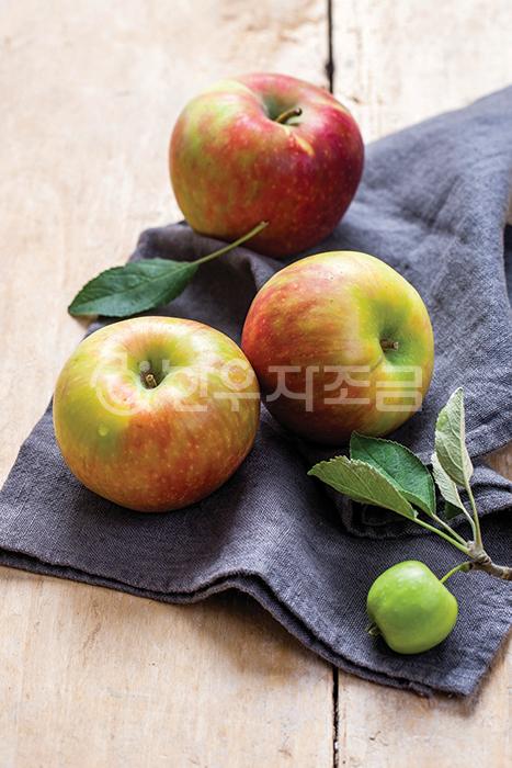 12 사과.jpg